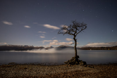 Probably the most photographed tree in scotland, Mallorchy Bay on the coast of Loch Lomond.